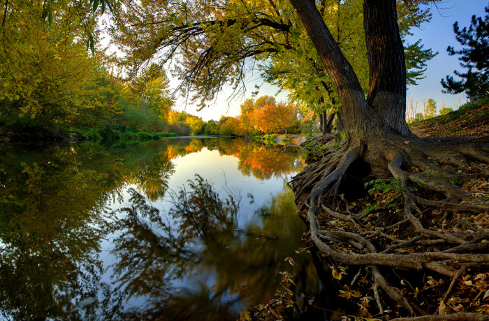 10. In Southern Idaho, trees always dip their roots in the Boise River for a refreshing drink.