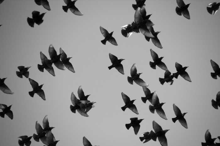 8) This artsy photo features a flock of European Starlings spotted at Sandy Point State Park.