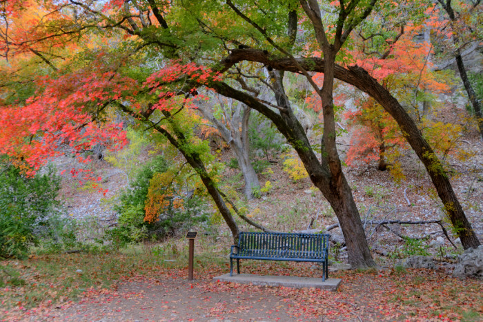 This spot was made for taking a break, sitting under a canopy of color with your special someone, and feeling like all is right in the world.