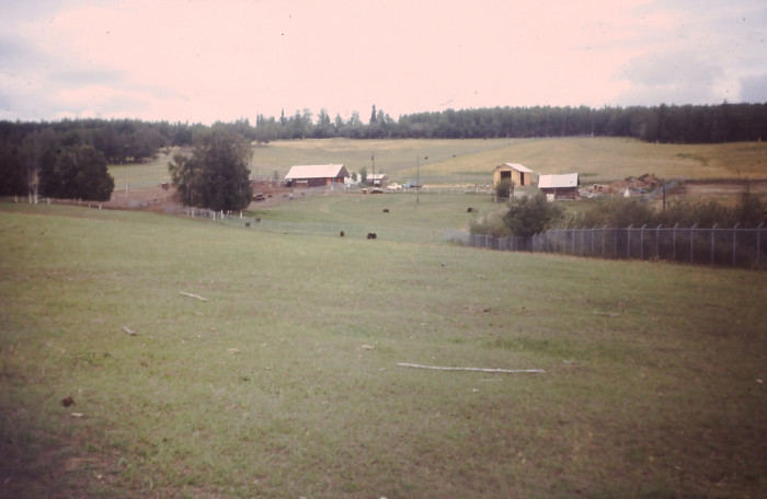 4) Another quaint Musk Ox Farm near Denali.