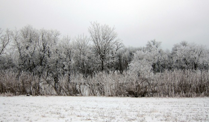 8. These trees are beautifully frosted.
