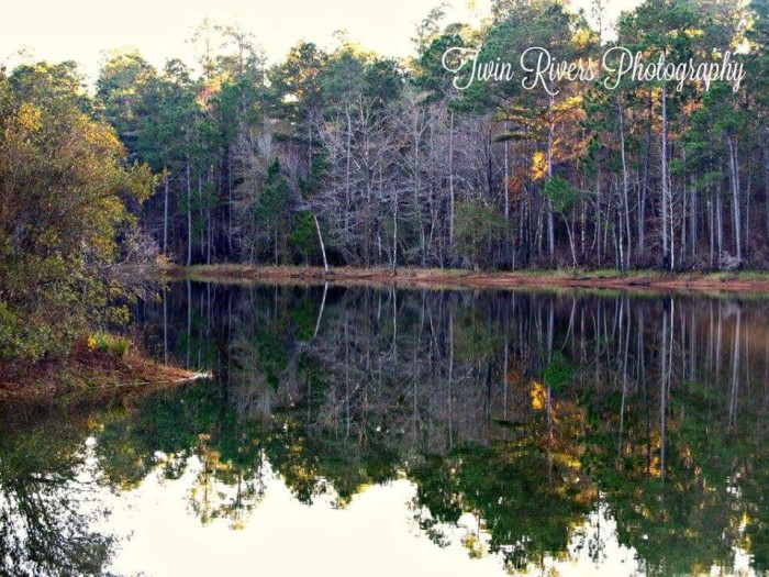 7. DeSoto National Forest (located between Hattiesburg and Gulfport)