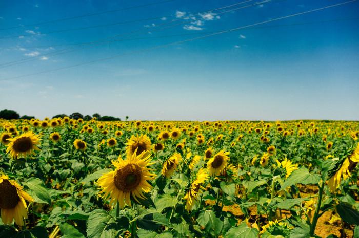 7. Isn't North Dakota just cornfields everywhere?