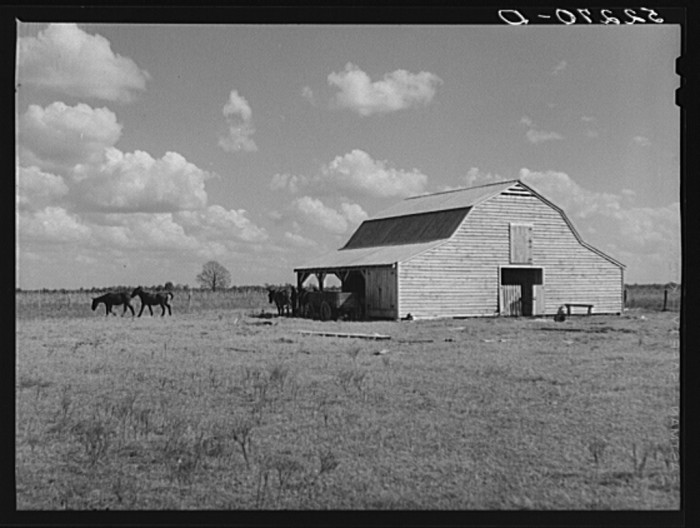 7. The newly purchased home and mules of a Belzoni tenant farmer.