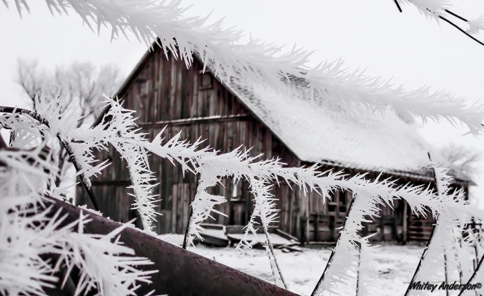 9. Whitey Anderson snapped this photo of an old barn in Buffalo Center.