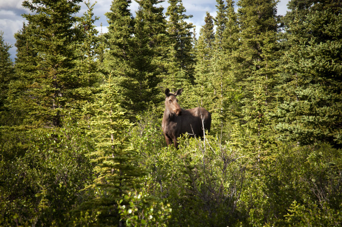 1) Healy, Alaska