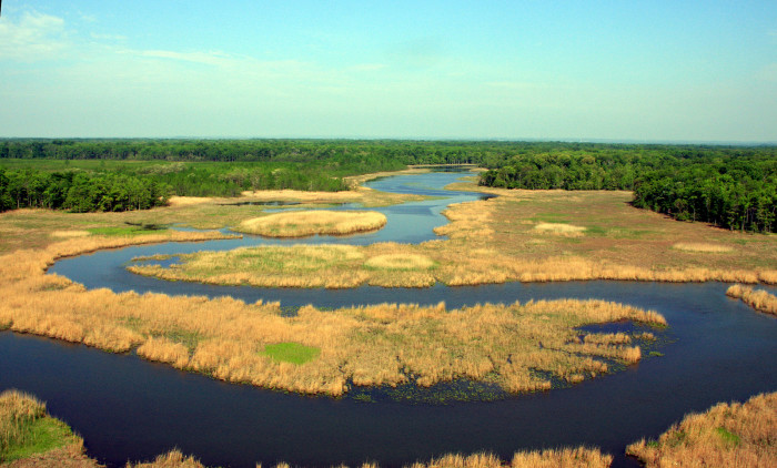 6) This photo captures the bald eagle habitat near Aberdeen Proving Ground.
