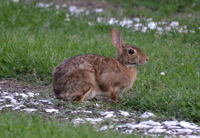 2. Bloodthirsty Spook Rabbits