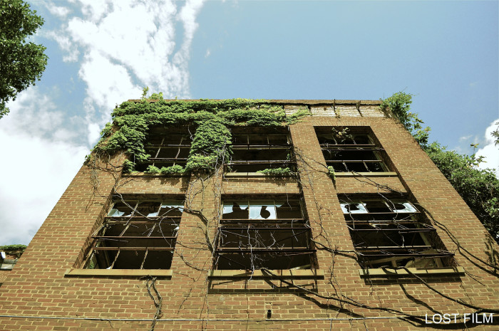 Nature intertwines with the buildings, as vines creep into the nooks and crannies of windows and doorways.