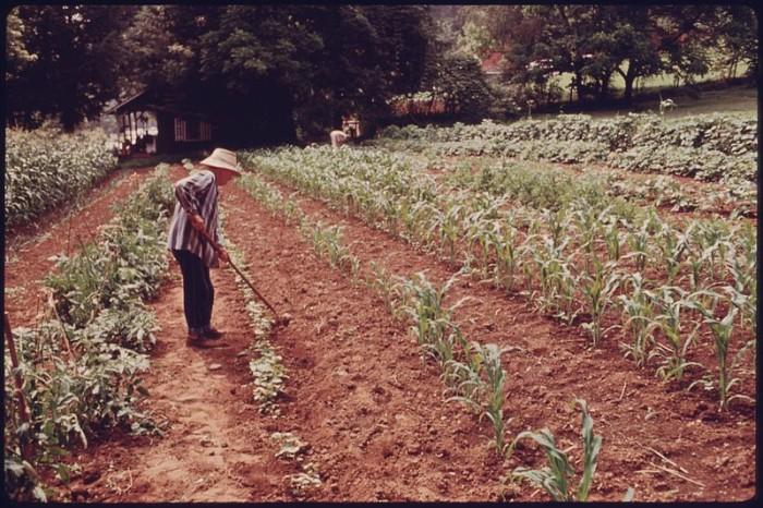 6. THEN: Georgia Farm