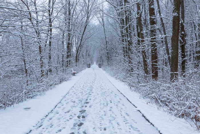 8. Patrick Trepp took this peaceful photo of a snowy trail in Cedar Falls.