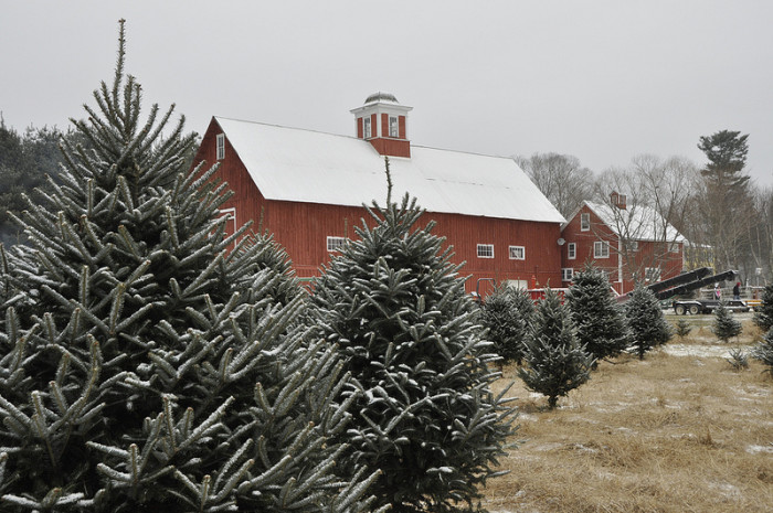 15.  Don't forget about Christmas Tree farming.