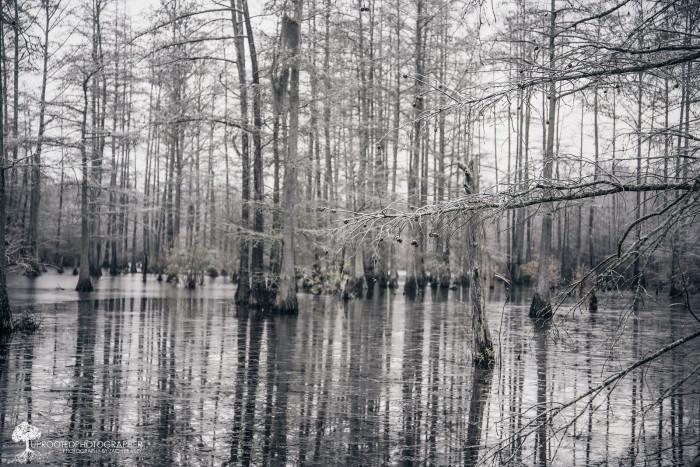 15. The snow swamp.