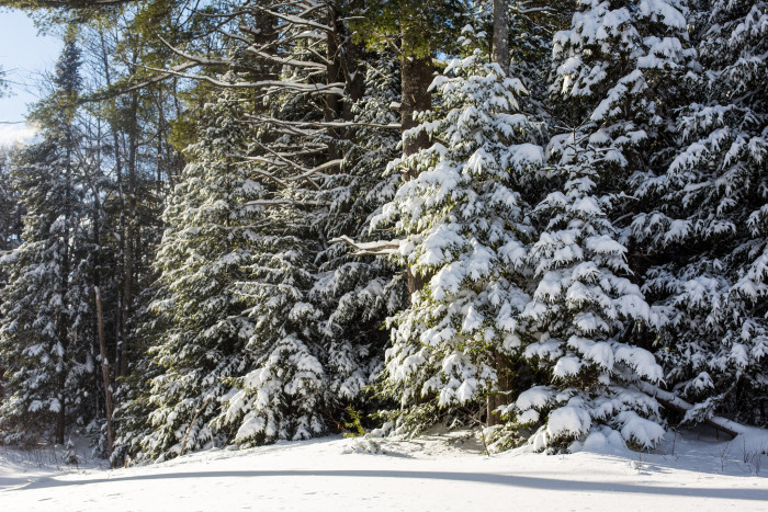 5. These fir trees in Alexandria.