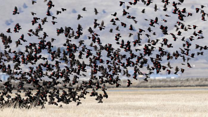 10. Bird watch at the Klamath Basin National Wildlife Refuge.