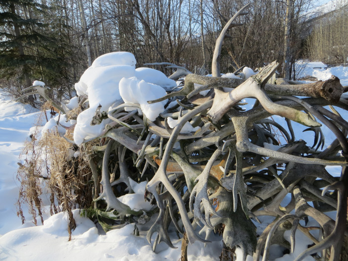 3) How about an antler farm?