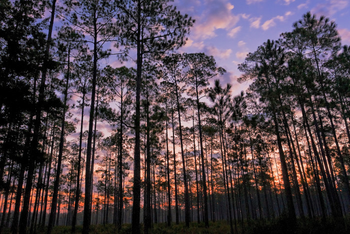 12. Apalachicola National Forest offers hiking, birding and wildlife viewing, all close to Tallahassee.