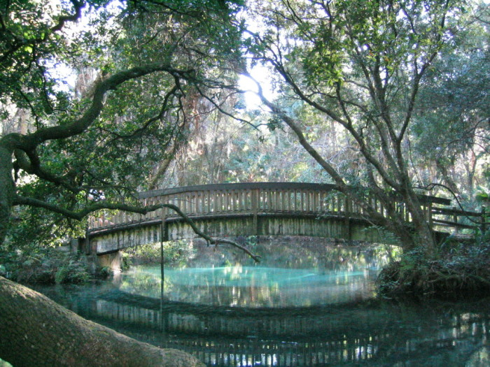 9. Juniper Springs in Ocala National Forest looks like a scene straight out of a fairy tale.