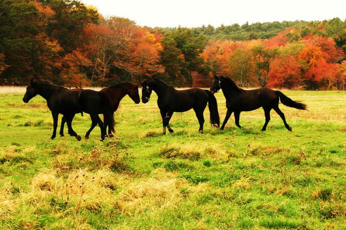 11. Elegant horses in Chiltonville, Plymouth.