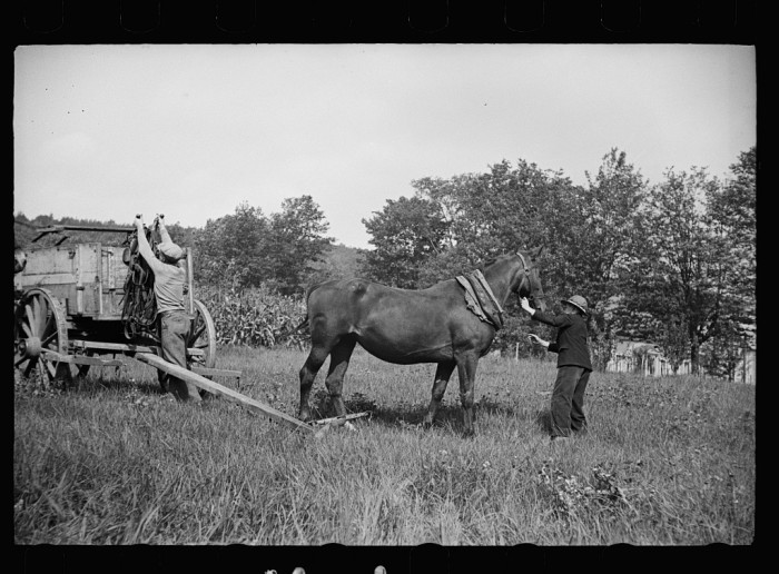 9.  The wagon has carried them into the fair and now the horses will try for the blue ribbon.