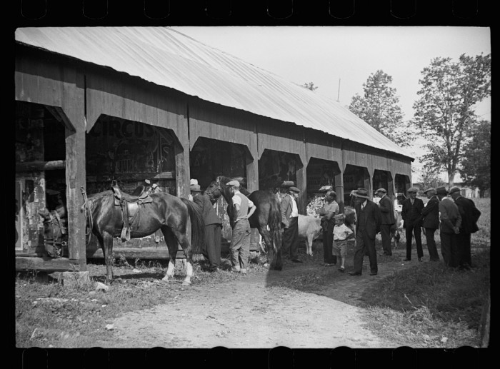 11.  Much of the talk is about the stock which is proudly shown at the fair in Albany.