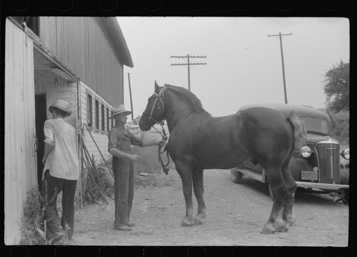 2. Here is a stallion brought for mating on a farm near Pine Grove Mills.