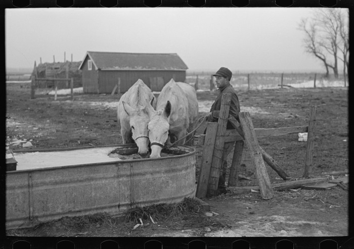 3. This farmer from Estherville breaks the ice to water his mules on a cold winter morning.