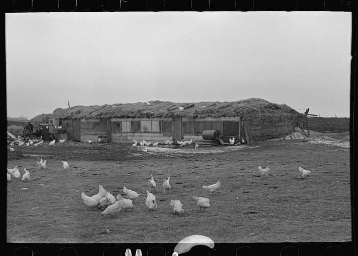 5. A farmer near Sampson built this straw barn for his chickens and livestock in 1936.