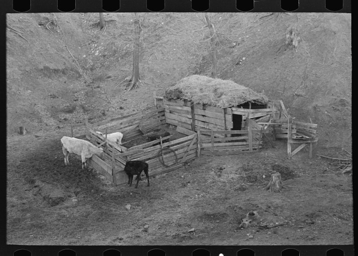 7. This simple livestock shelter was used in 1936 by a farmer near Anthon.