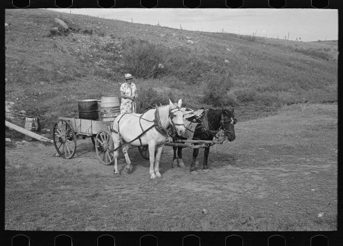 """3. """"Mrs. Olie Thompson ready to drive home from the spring with barrels full of water. Williams County, North Dakota"""""""