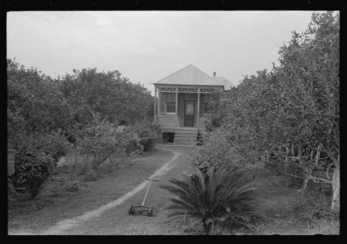 4. Front yard of an Orange grower in Boothville, LA, Plaquemines Parish