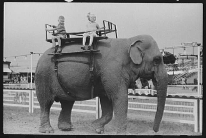 19.  A ride on the elephant at the Champlain Valley Exposition, Essex Junction, Vermont.
