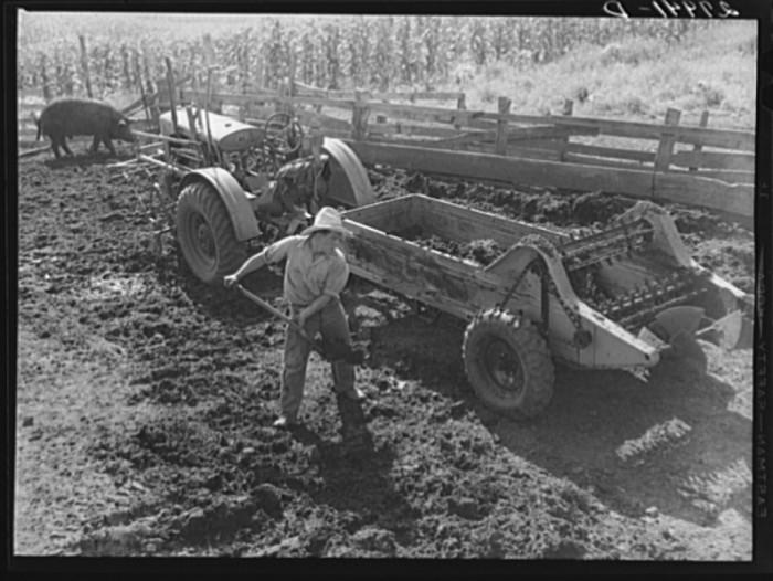 9. A farmer loads manure into the spreader in Jasper County.