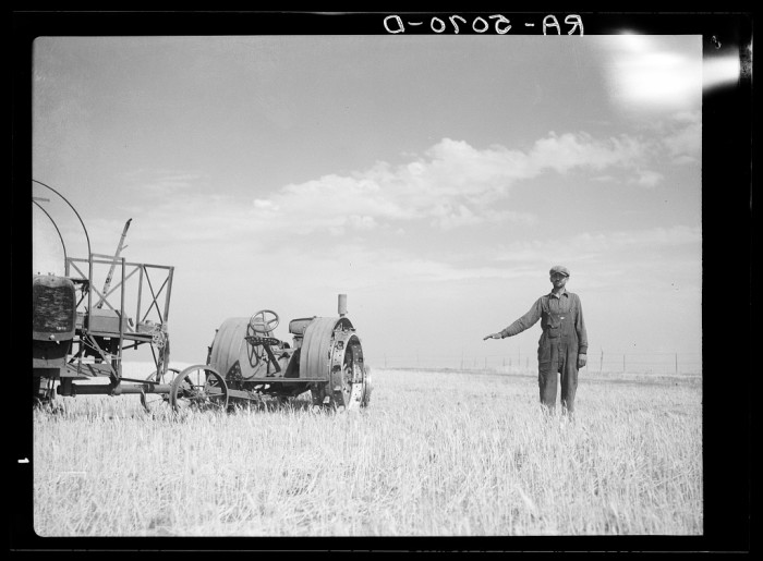 """4. """"John Frederick of Grant County, North Dakota, shows how high his wheat would grow if there were no drought"""""""