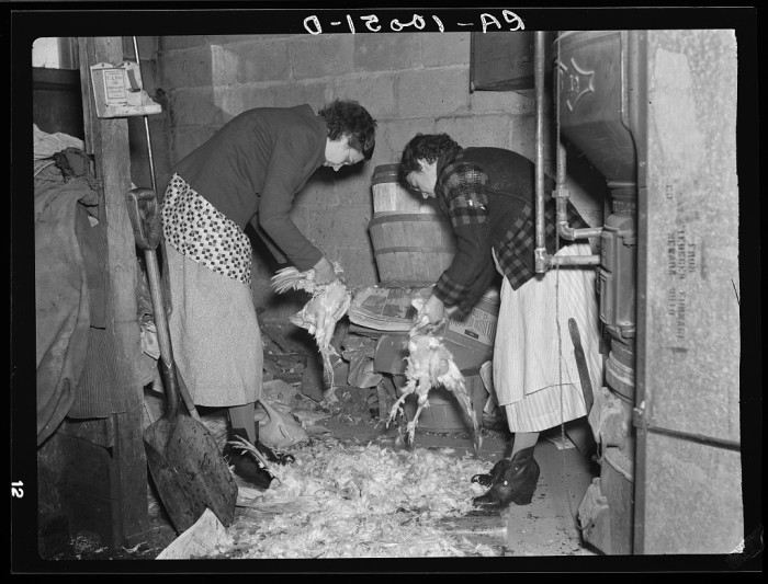 12. Two women on a farm near Dickens hand clean chickens before canning them.