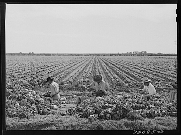 6. Agriculture is still a large influence in small towns. Some had major crops like these lettuce fields.
