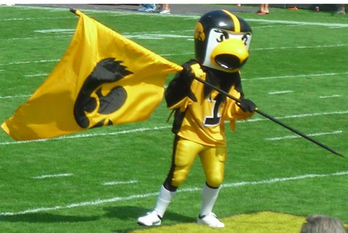 9. This beloved black and gold bird.