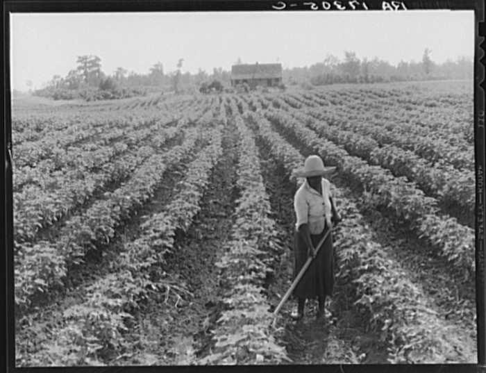 9. Acres upon acres of crops, especially cotton, could be found pretty much anywhere in the state. The farm shown was photographed in Coahoma County in the summer of 1937.