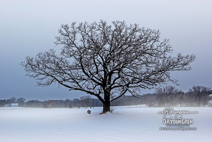 5. This beautiful snowy tree in Hastings is perfect for the silver screen.