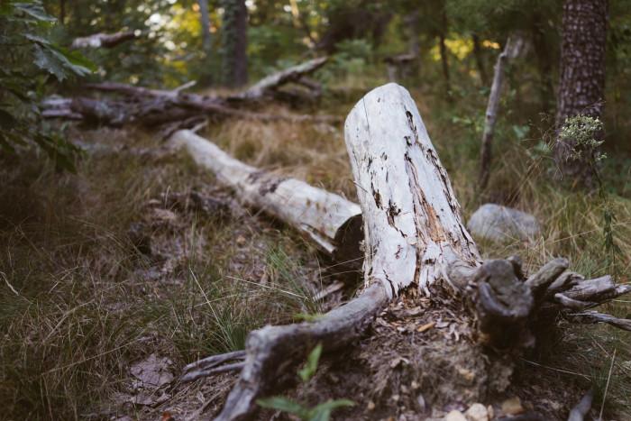 2. The hiking trails: