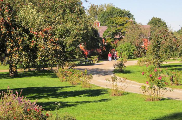 2.  Apple trees at Shelburne Museum.