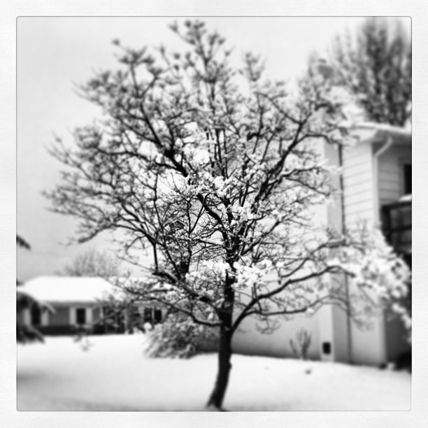 17. Snow covered tree