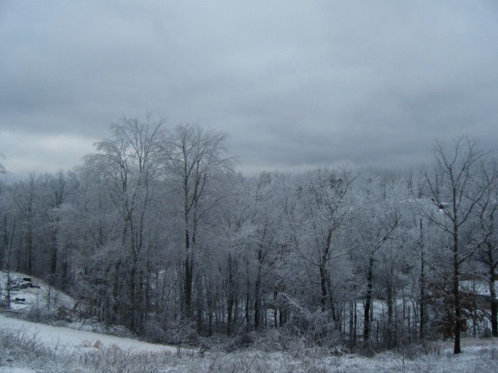 6. A white forest