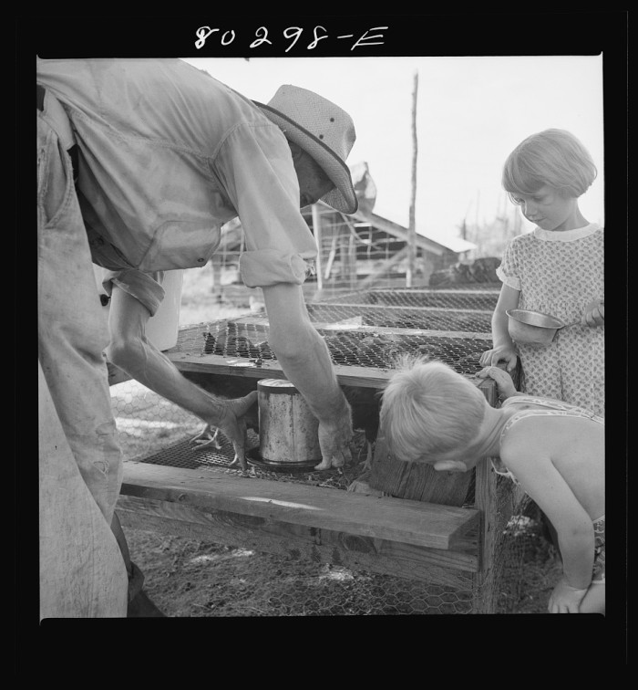 12. James F. Drigger is teaching his boy and girl how to water chickens in the FSA (Farm Security Administration) wire-floored brooder in Coffee County - August 1941.