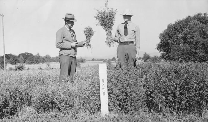 9. Alfalfa crops, 1955.