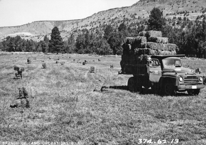 8. An alfalfa field in Warm Springs, 1961-1962.