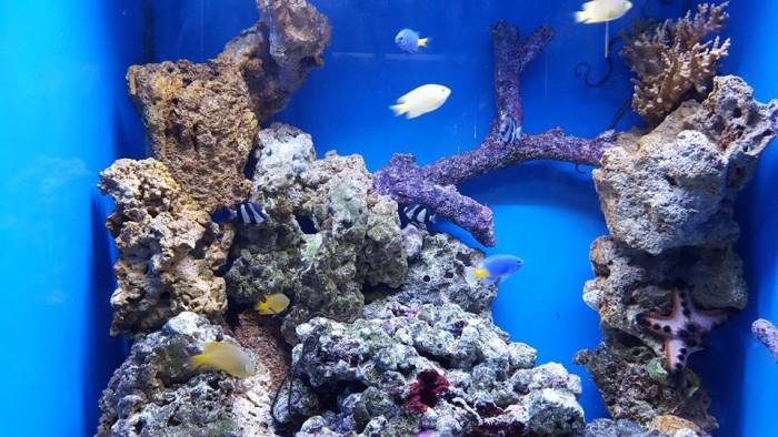 5) Visit an aquarium