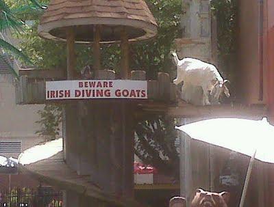 Beware Diving Goats