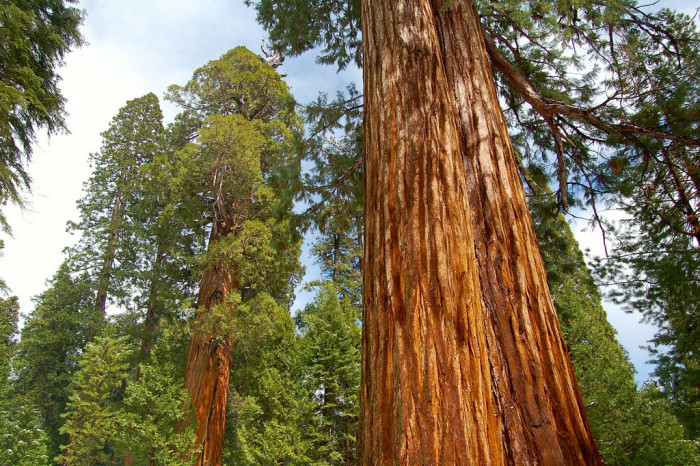 California: Sequoia National Forest