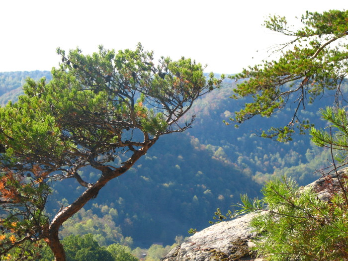 Daniel Boone National Forest: